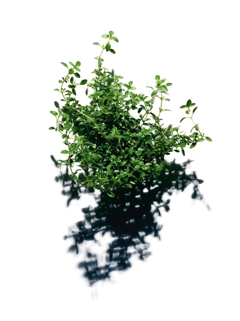 Clarins_AA Treatment Essence_Lemon Thyme